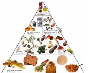 Food-pyramid-animated-diete-screen-saver